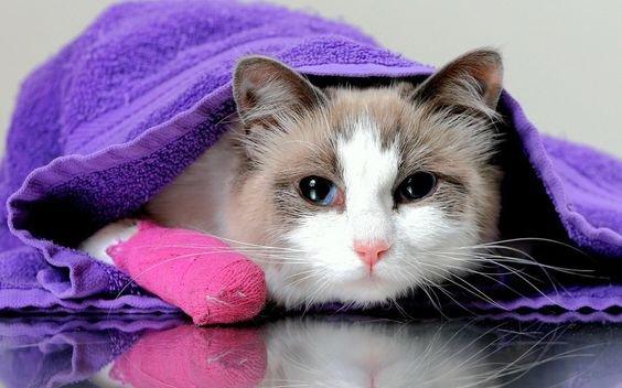 аллергия  кошки.jpg