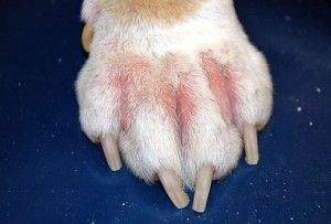 аллергия собаки.jpg