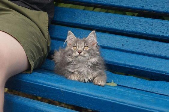 бездомная кошка.jpg