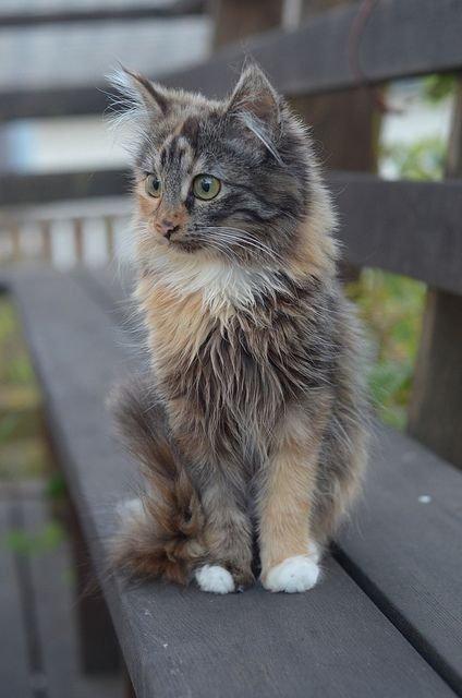 бездомная кошка2.jpg