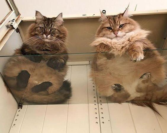 два кота на полке.jpg