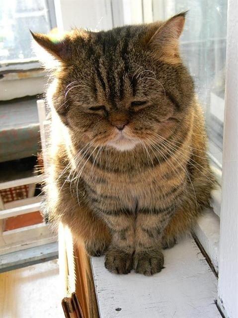 грустная кошка.jpg