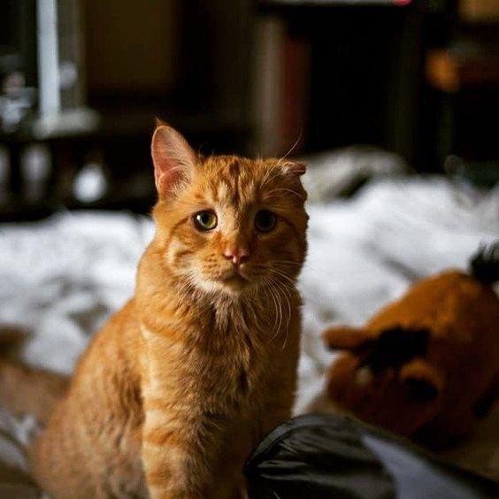 грустный кот.jpg