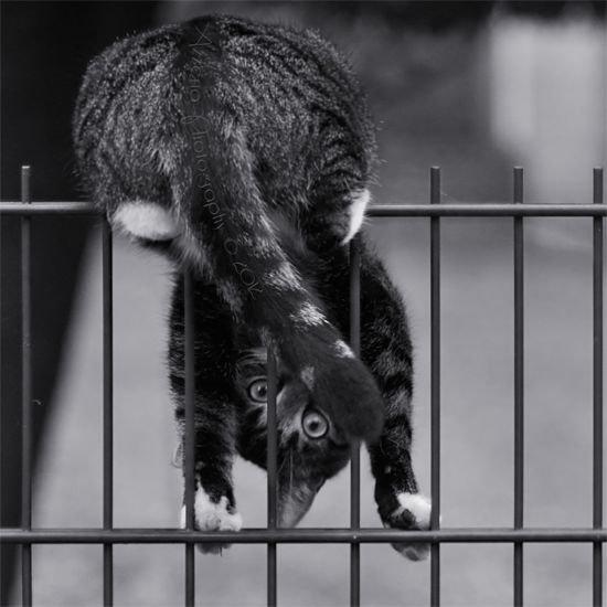 кошка на калитке.jpg