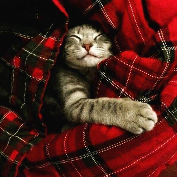 кошка обнимается.jpg