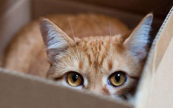 кошка прячетс.jpg