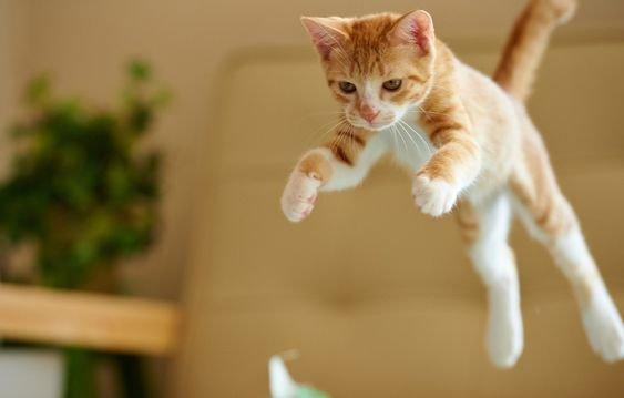 кошка прыгает.jpg