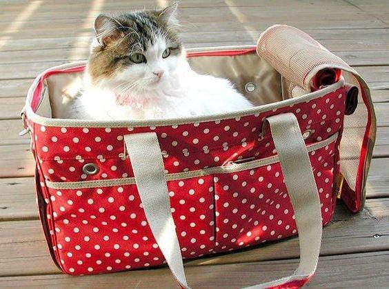 кошка в переноске.jpg