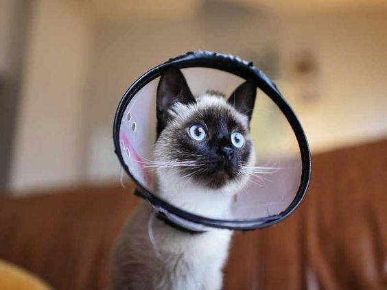 кошка в воротнике.jpg