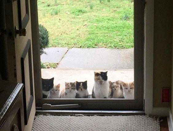 кошки на улице.jpg