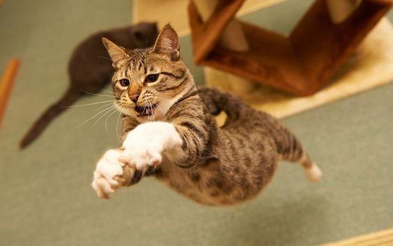 кошки прыгают.jpg