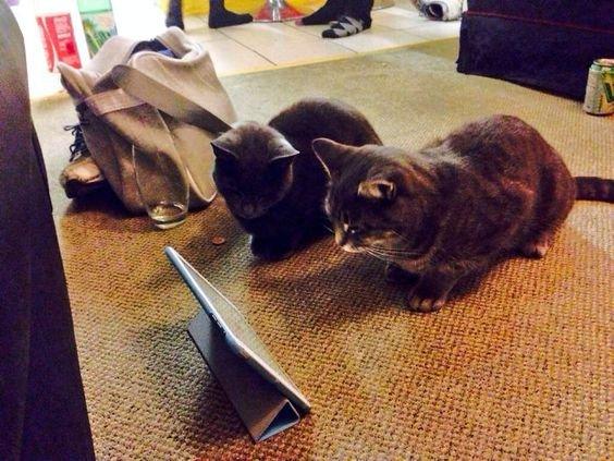 кошки рядом.jpg
