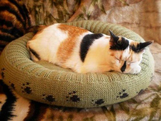 лежканка для кота.jpg