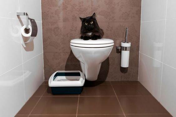 лоток в ванной.jpg