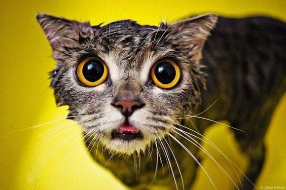 мокрый кот.jpg