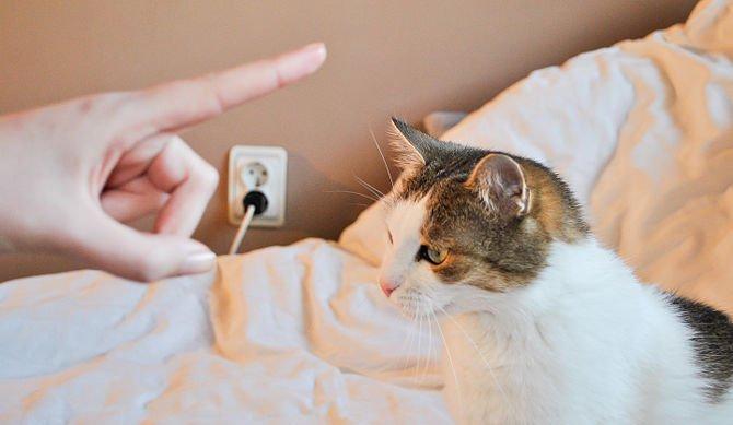 ругают кота.jpg