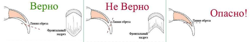 shema_kogti_1.jpg