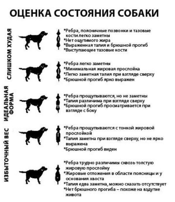 состояние собаки.jpg