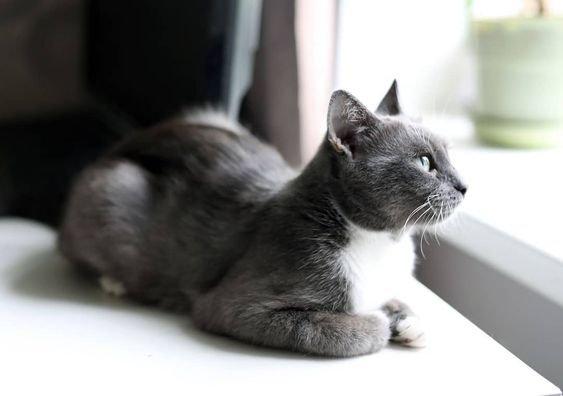 спокойная кошка.jpg