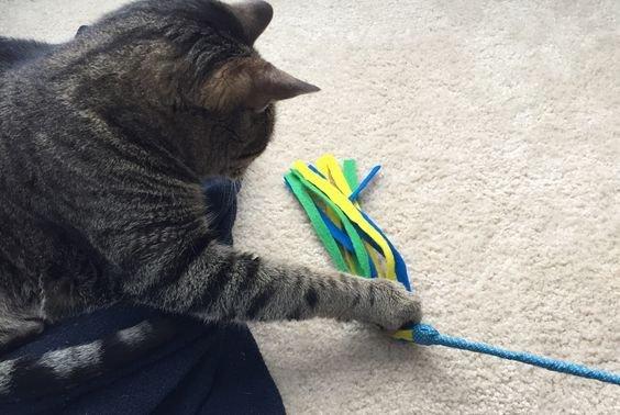 удочка для кошки.jpg