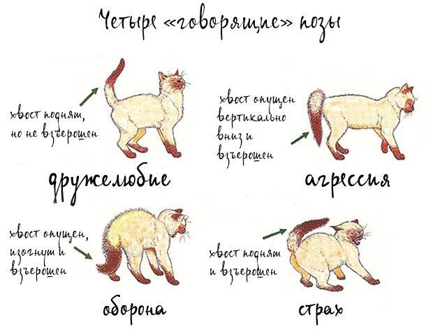 эмоции кошки.jpg