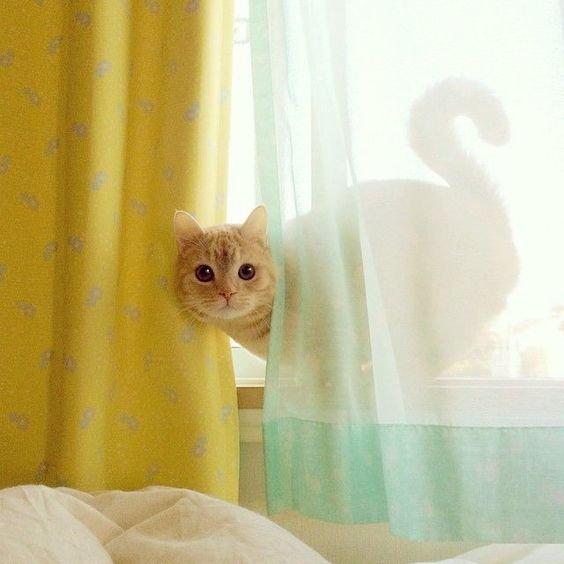 кошка на окне.jpg