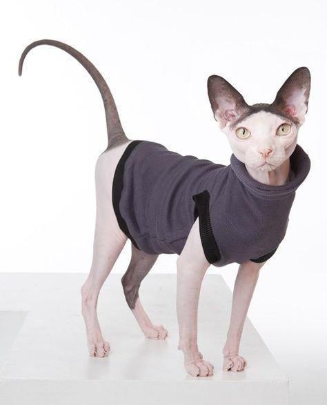 кошка в свитере.jpg