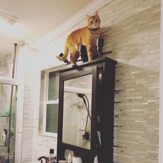 кот на шкафу.jpg